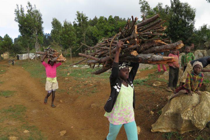 De Kiskeya a Haiti: Mais Où Sont Passés Nos Arbres? (Where Have Our Trees Gone?)