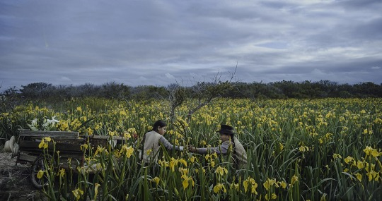 Image Caption: Featured image for 'La Vendedora de Liros (The Lillies' Seller)'.