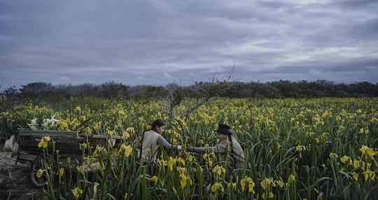Image Caption: Featured image for 'La Vendedora de Liros (The Lillies' Seller)'.